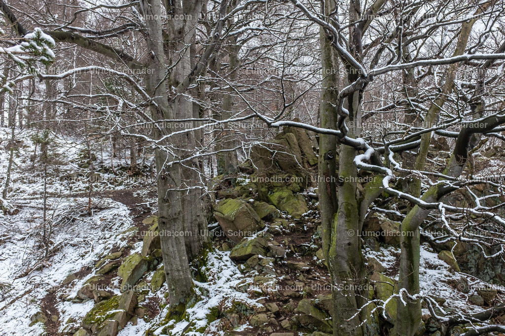 10049-12039 - Paternosterklippe im Oberharz
