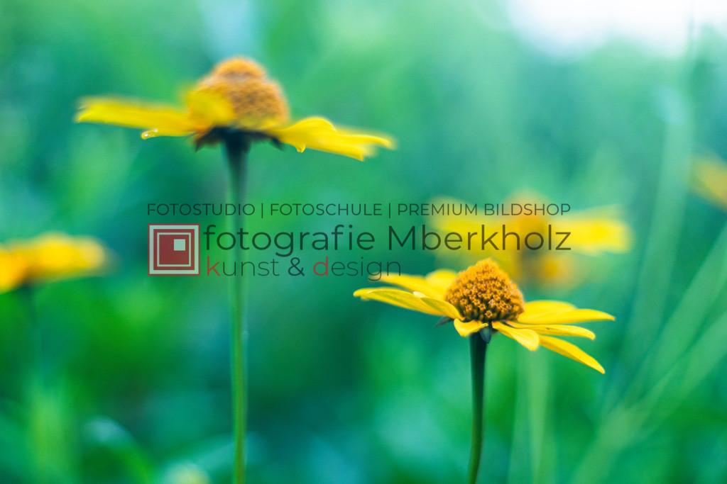@Rainer_Schau_mberkholz_Blumen_Blüten_MGL2623