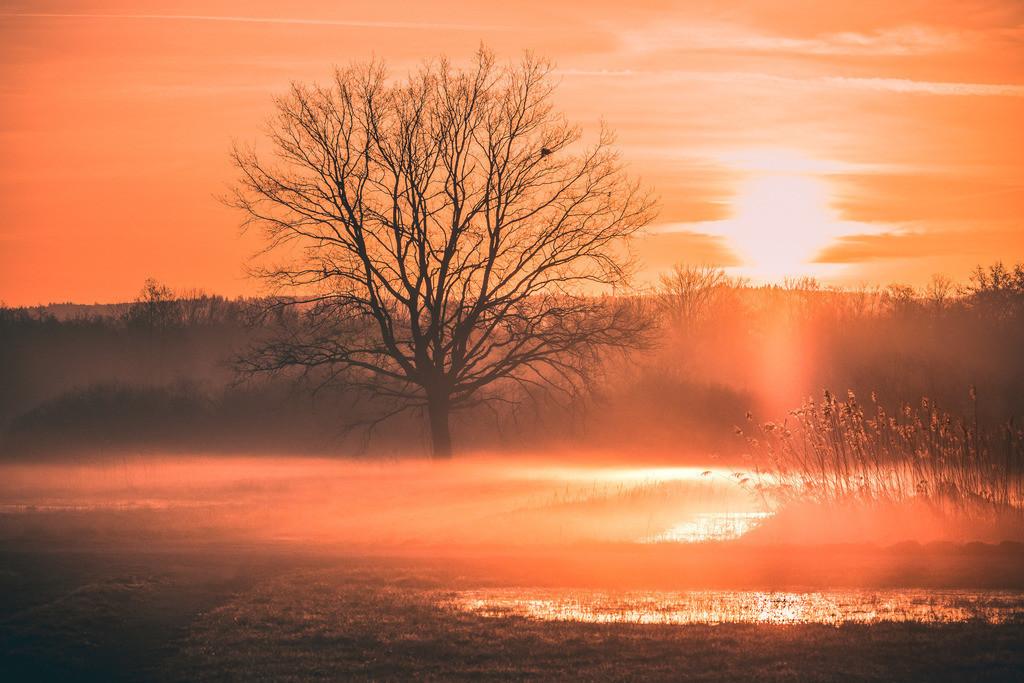 Morgenstund | Frühlingshafte Morgenstimmung in der Rheinebene