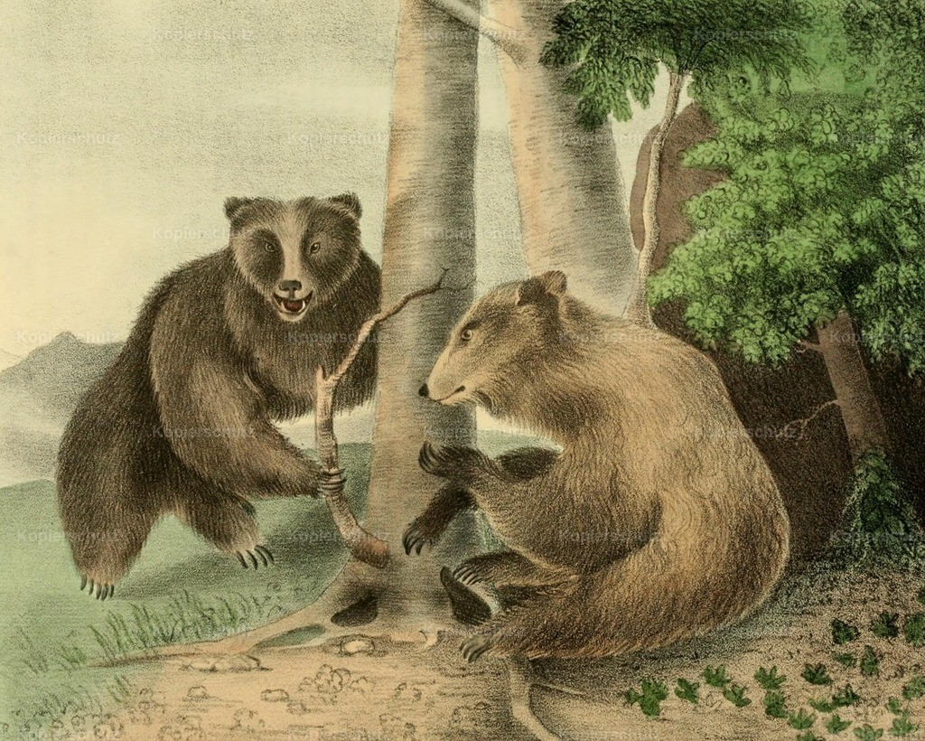 Doughty_ T. (1793-1856) - Cabinet of Natural History 1830 - Grizzly Bears