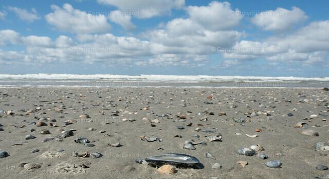 Norddeutsche Küste | Ein leerer Strand mit Muscheln an der Nordsee