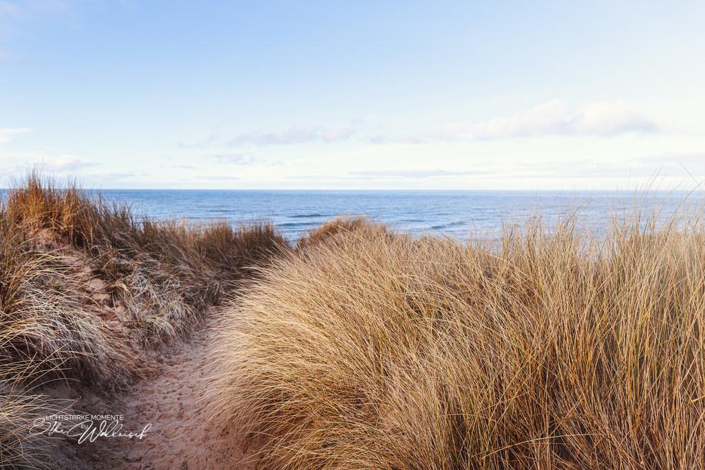 Lieblingswege   Dünenlandschaft am Roten Kliff, Sylt