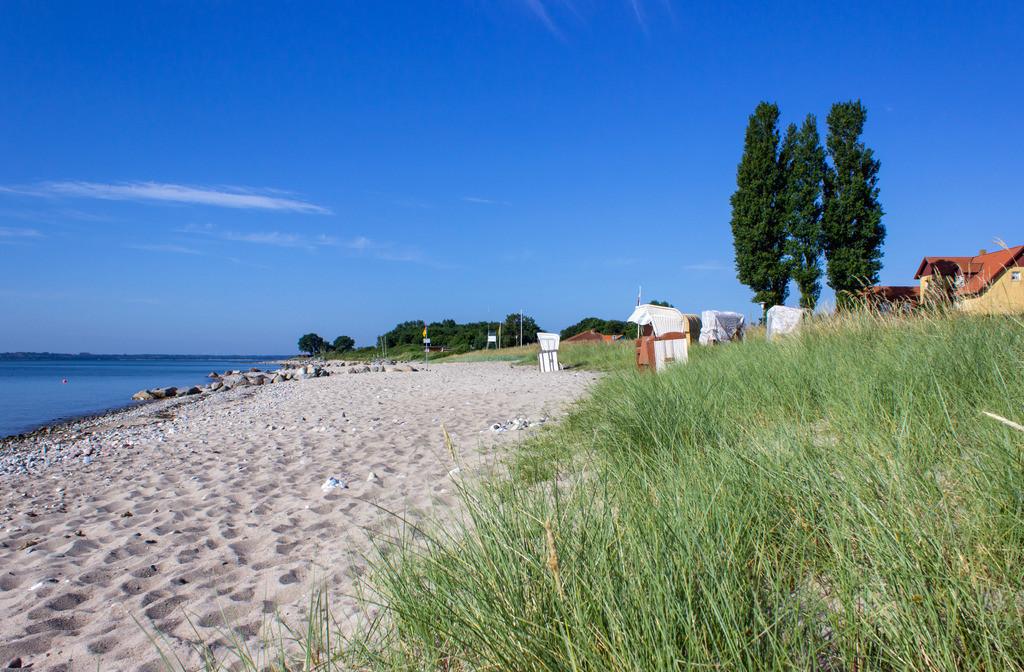Ostseestrand im Sommer | Strandgras am Strand