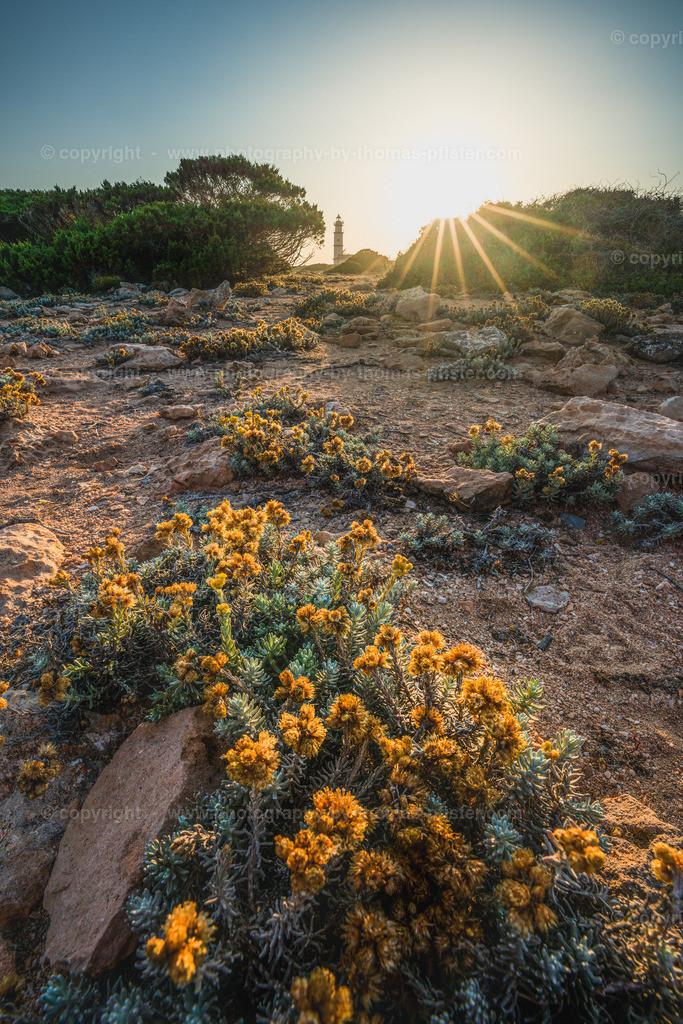 Cap des Ses Salines Mallorca-1