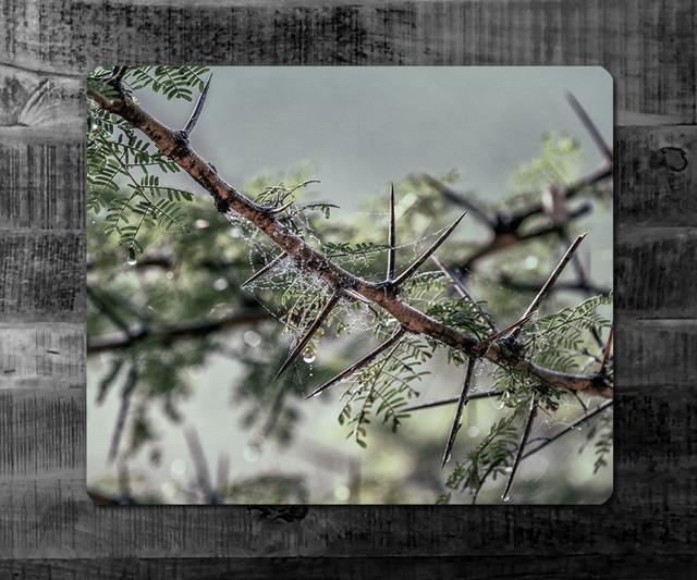 SPIDER WEB | Kenya