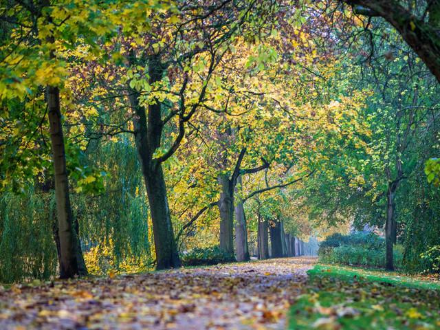 Celle 23.10.2020 (5)   exlusive Natur- Landschafts- und Makrofotografie aus Celle