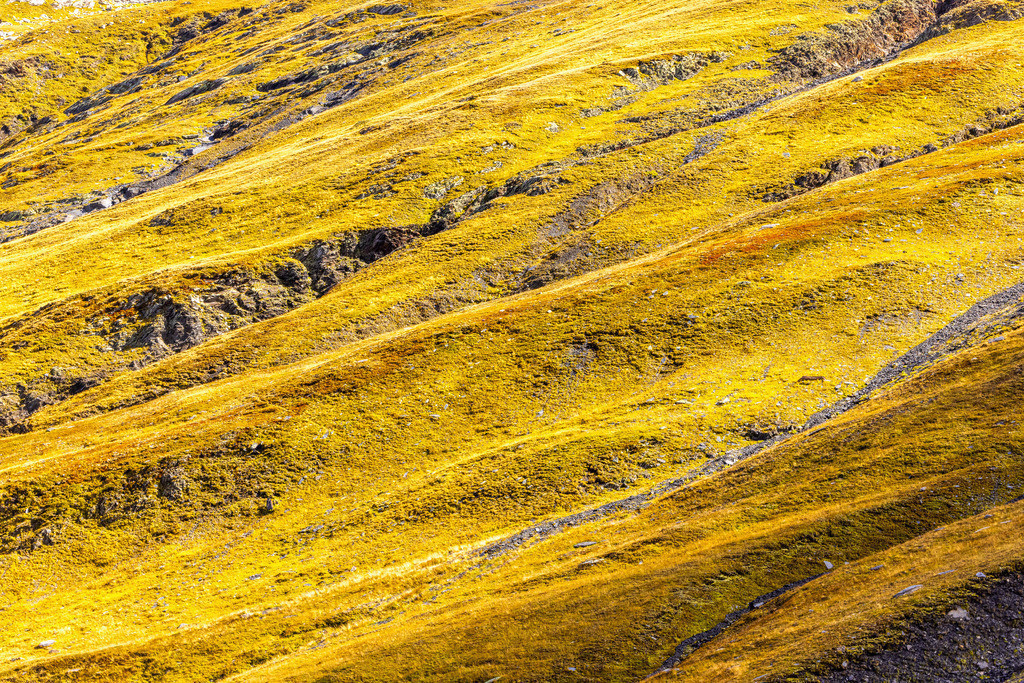 Alpine gras mats   The vegetation also unfolds its fascinating colors at over 2000 meters altitude.
