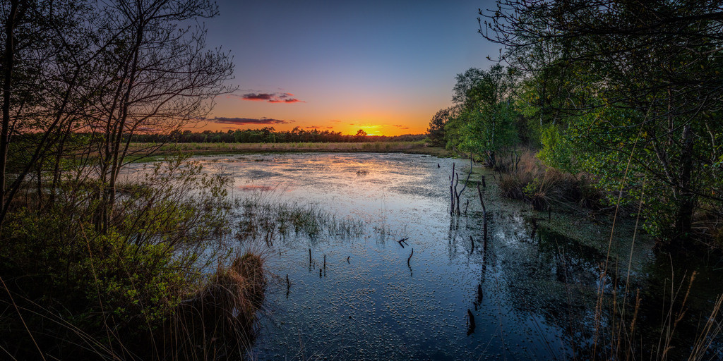 Sonnenuntergang im Hamberger Moor | Letztes Tageslicht im Hamberger Moor.
