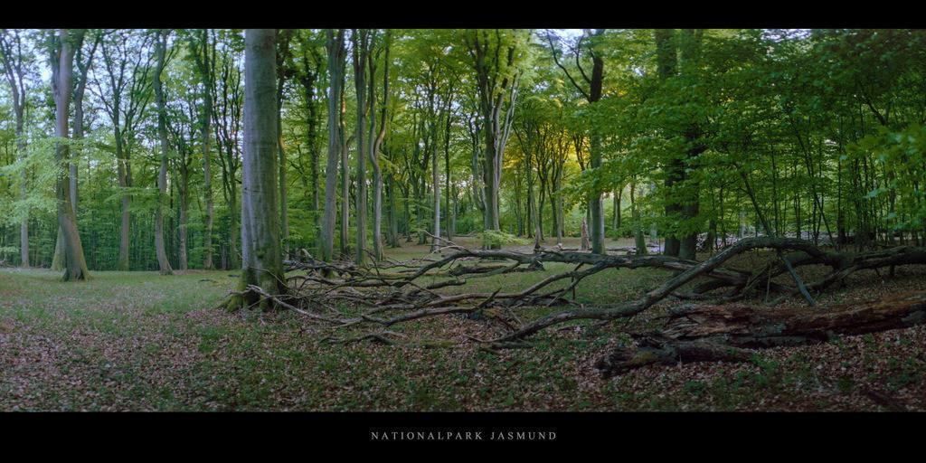 Nationalpark Jasmund | Buchen im Buchenwald und Nationalpark Jasmund auf Rügen