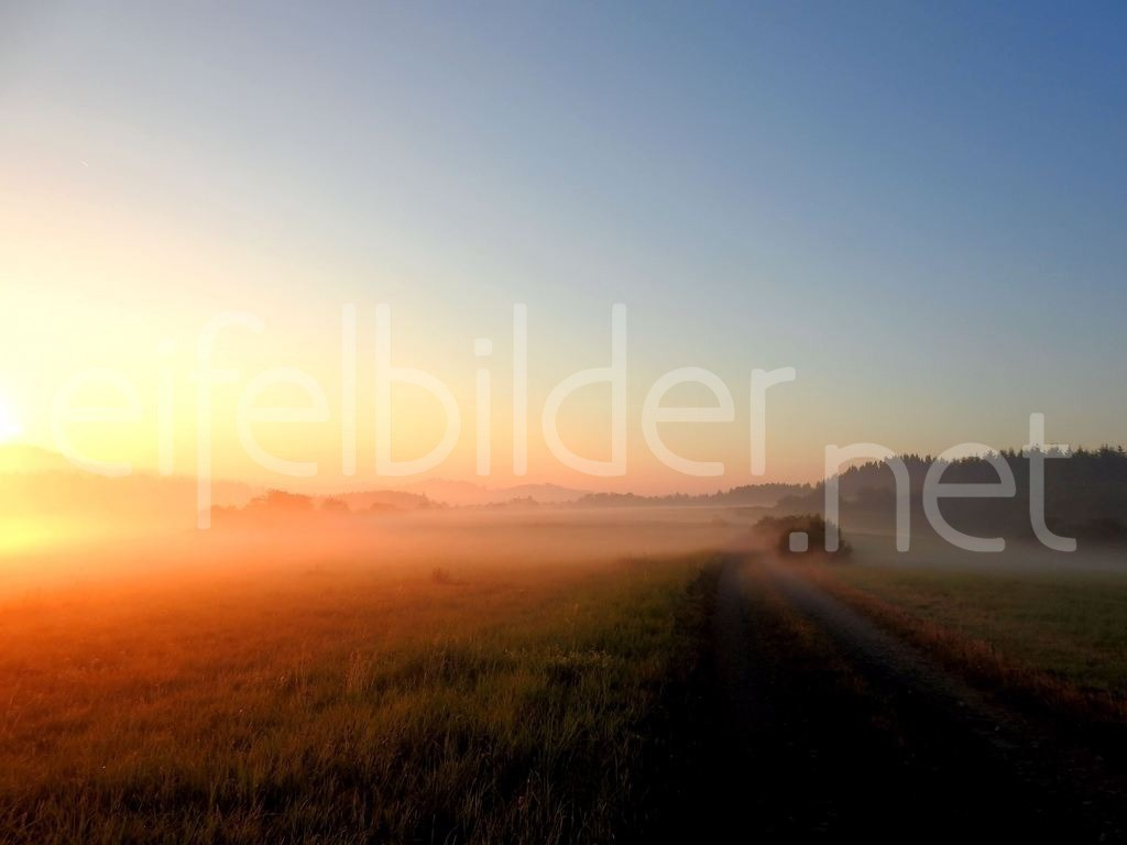 Eifelmorgen | Eifel Landschaft im Sonnenaufgang - Frühnebel trifft Morgensonne