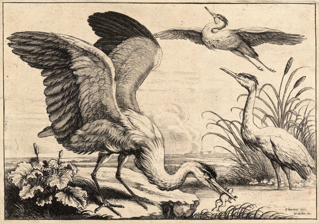 Wenceslas_Hollar_-_Three_herons_(State_1)