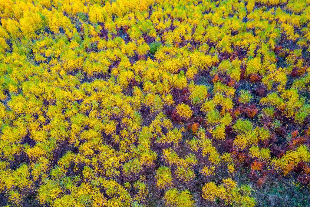 JT-181106-026 | Herbstlicher Wald im Sauerland, NRW, Deutschland, in der Nähe von Schmallenberg,
