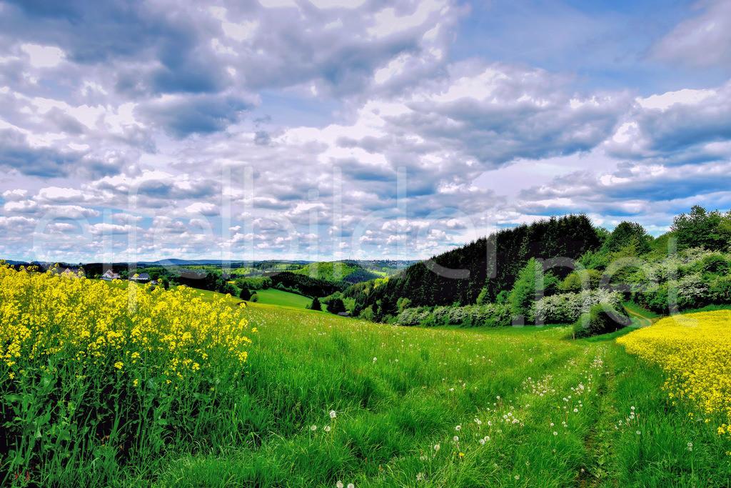 Eifellandschaft mit Raps & Wolken | fotografiert bei Tettscheid, Gemeinde Üdersdorf (Vulkaneifel)