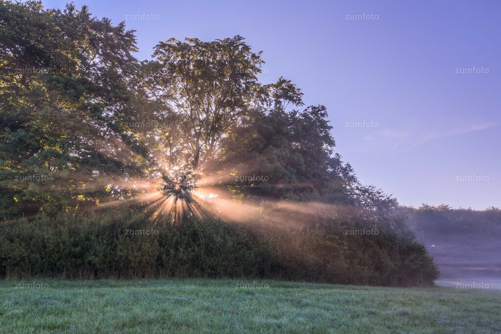 0-120815_0711-8407-10 | Dateigröße 5703 x 3802 Pixel Sonnenstrahlen brechen im Nebel durch die Bäume.