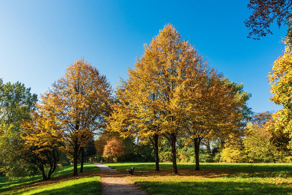 rk_05102 | Herbstlich gefärbte Bäume mit blauen Himmel.