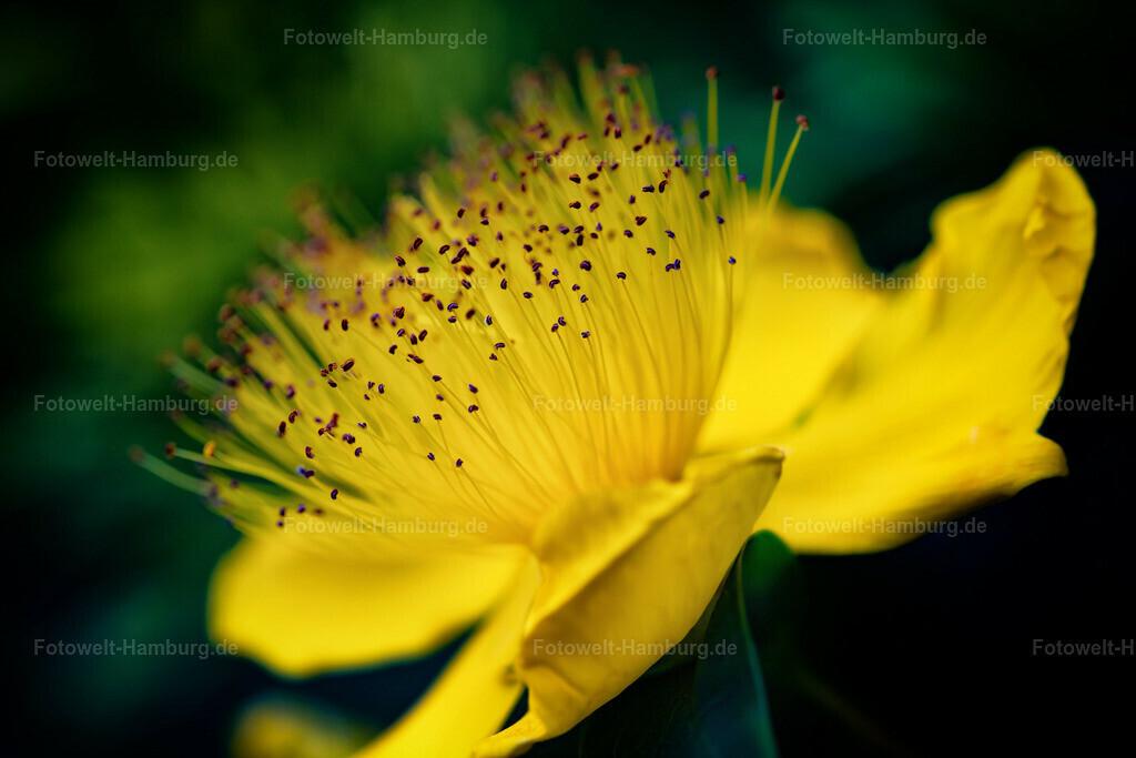 10200619 - Gelbe Blüte