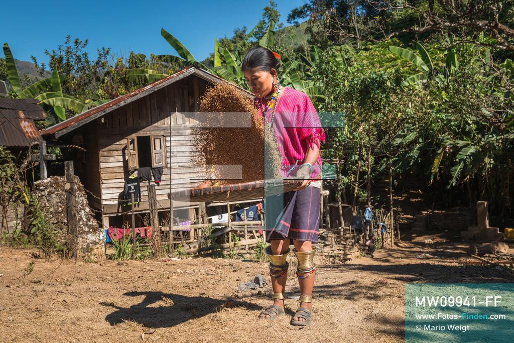 MW09941-FF   Myanmar   Loikaw   Reportage: Loikaw im Kayah State   Frau der ethnischen Minderheit Kayaw siebt Hirse im Bergdorf Htay Kho. Hirse wird für das traditionelle Bier verwendet, das bei den Bergstämmen in Myanmar sehr beliebt ist. Nur die Kayaw-Frauen tragen handgewebte Kleidung. Charakteristisch sind ebenfalls der auffallende Schmuck und die Messingspiralen an den Knien sowie Knöcheln.   ** Feindaten bitte anfragen bei Mario Weigt Photography, info@asia-stories.com **