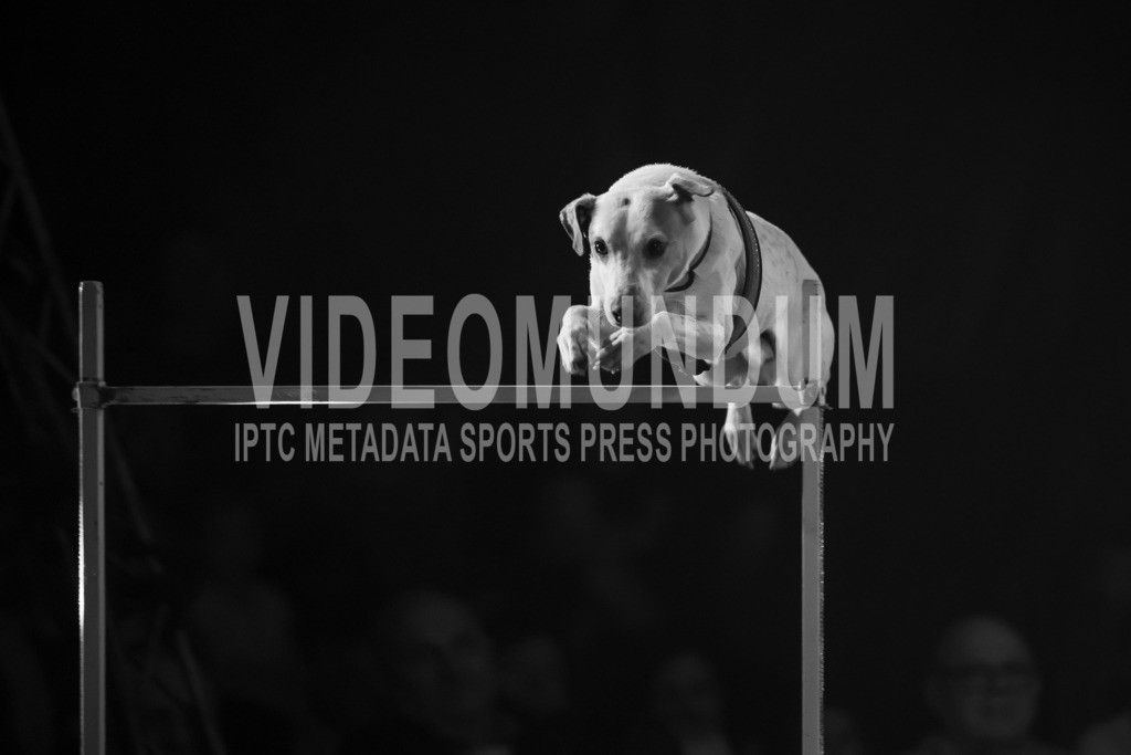 Deinze, Belgium - April 2, 2018: Wiener Circus   Deinze, Belgium - April 2, 2018: Wiener Circus, Photo: videomundum