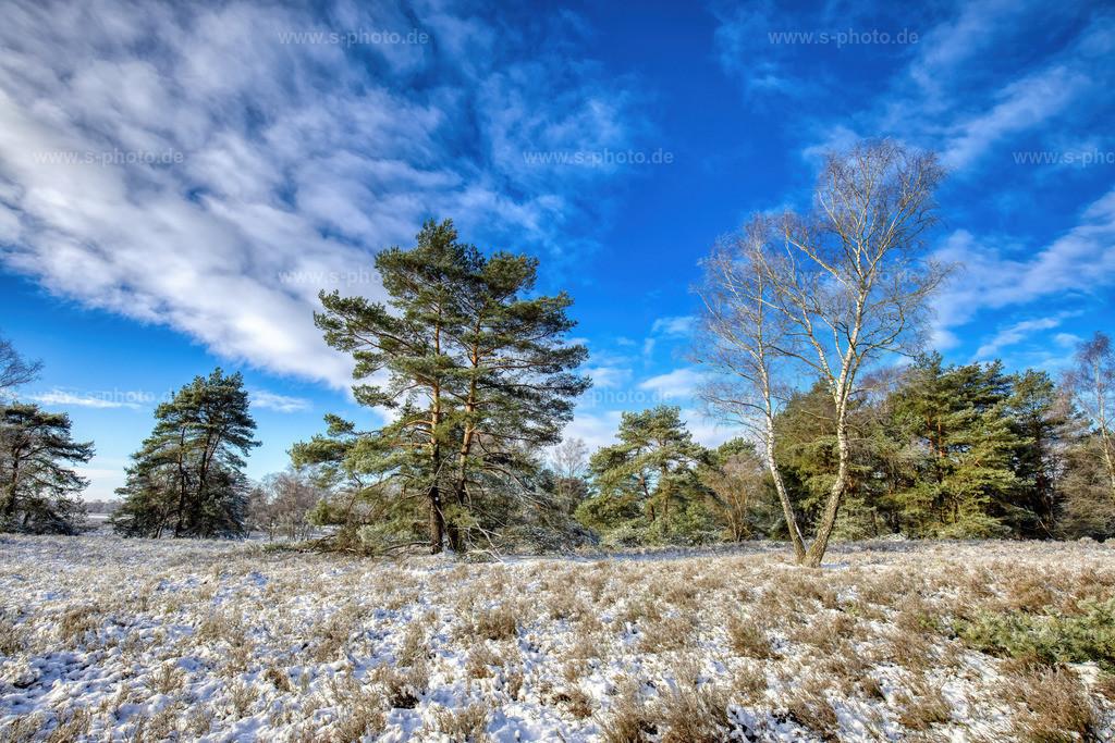 Winter.. | ...in der Fischbeker Heide
