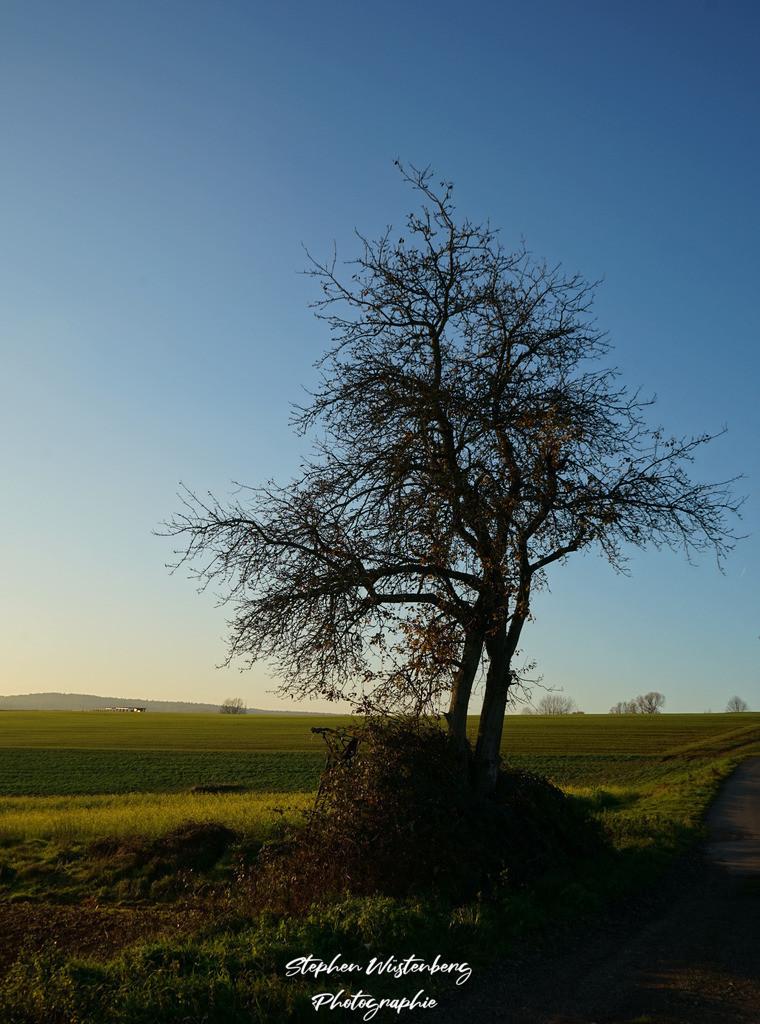 Winterbaum | Winterbaum