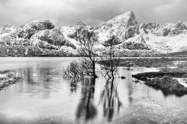 Baumspiegelung im See vor einer winterlichen Bergkette | Bäume stehen im Wasser, markante Spiegelung, Eislandschaft mit Bergen im Hintergrund, grauer Himmel, Schwarzweiß-Bearbeitung - Location: Norwegen, Lofoten
