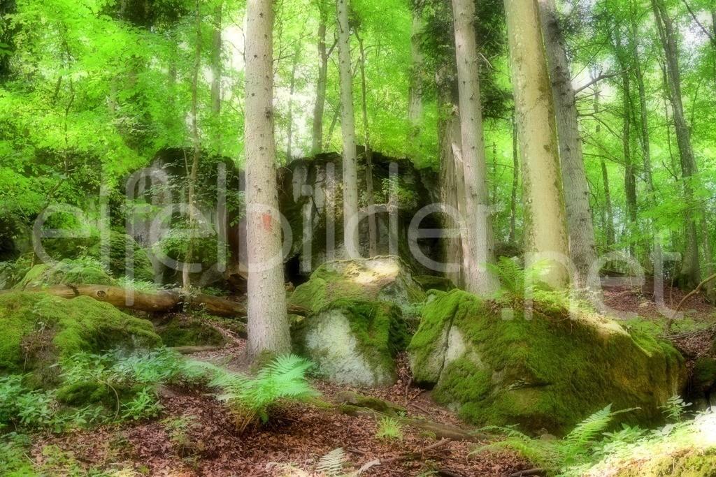 Märchenhafte Eifelwäder ...   Naturdenkmal Löhley, Daun, Vulkaneifel