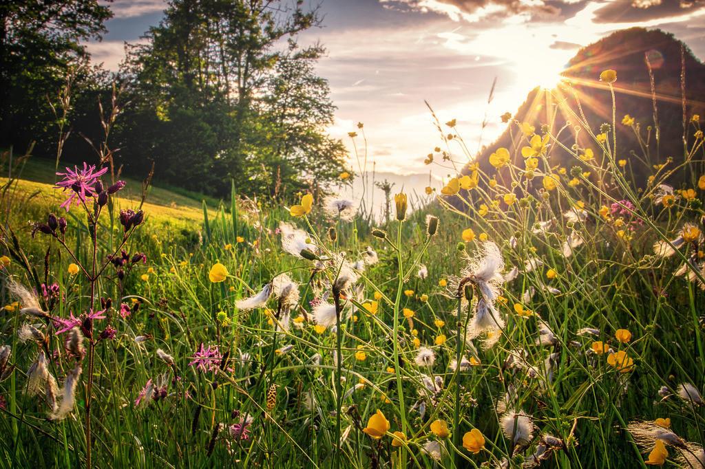 Blumenliebe | Rading Roßleithen
