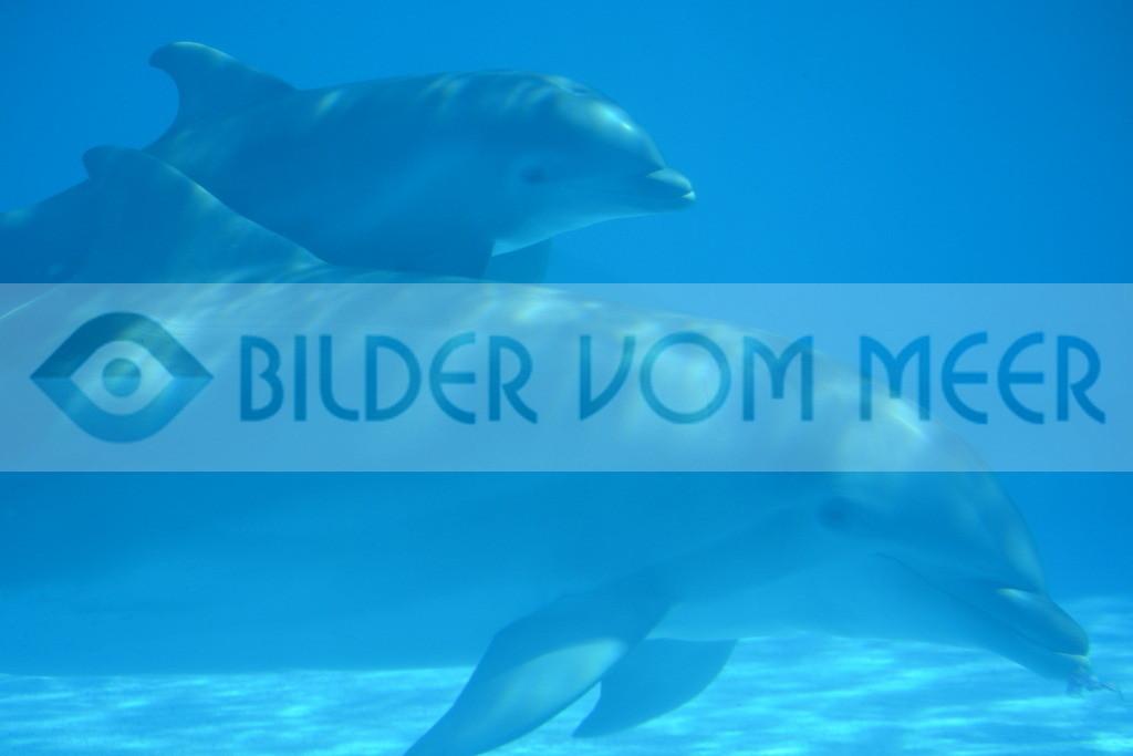Delfin Bilder | Foto Delfin Baby