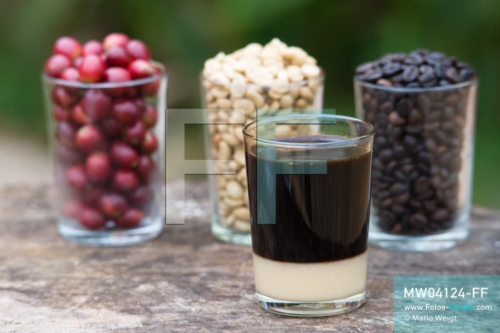 MW04124-FF | Laos | Paksong | Reportage: Kaffeeproduktion in Laos | Rote Kaffeekirschen sowie getrocknete und geröstete Kaffeebohnen. Im Vordergrund ein echter laotischer Kaffee (Coffee Lao), der mit gezuckerter Kondensmilch serviert wird. In den Plantagen auf dem Bolaven-Plateau gedeihen Sträucher der Kaffeesorten Robusta und Arabica.  ** Feindaten bitte anfragen bei Mario Weigt Photography, info@asia-stories.com **
