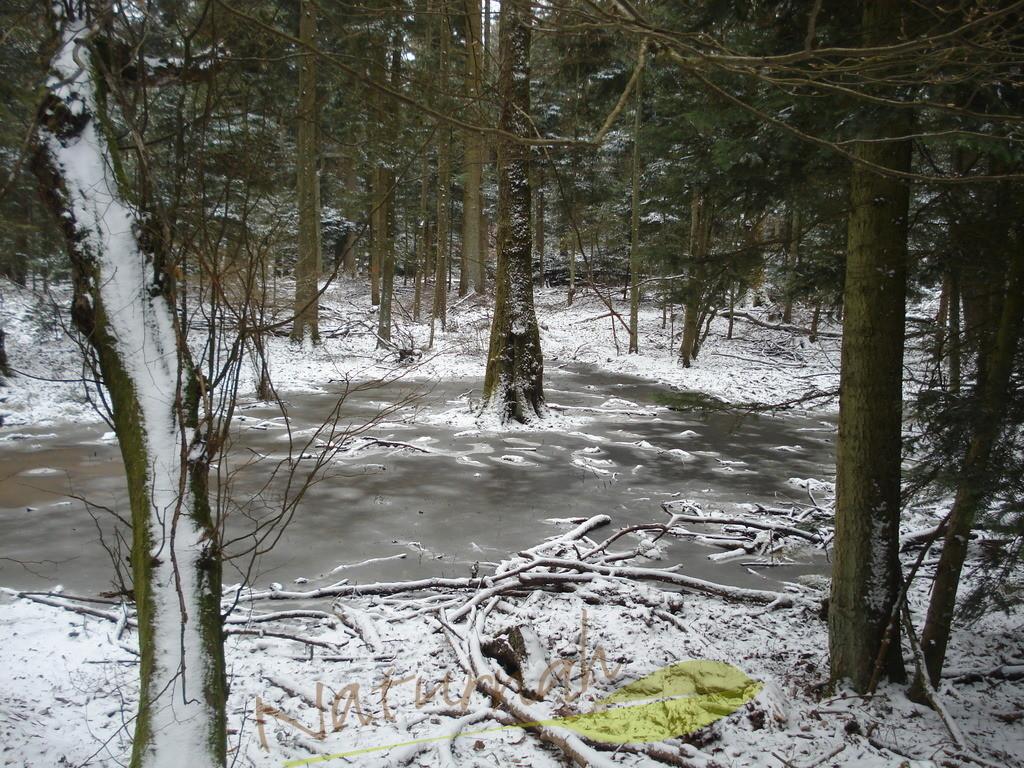 Zauberwald im Winter