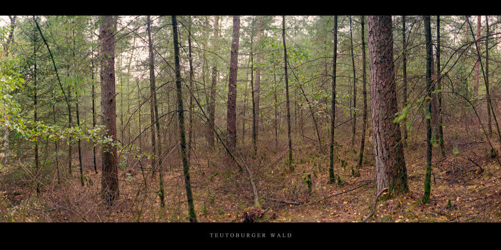 Teutoburger Wald   Mischwald im Teutoburger Wald