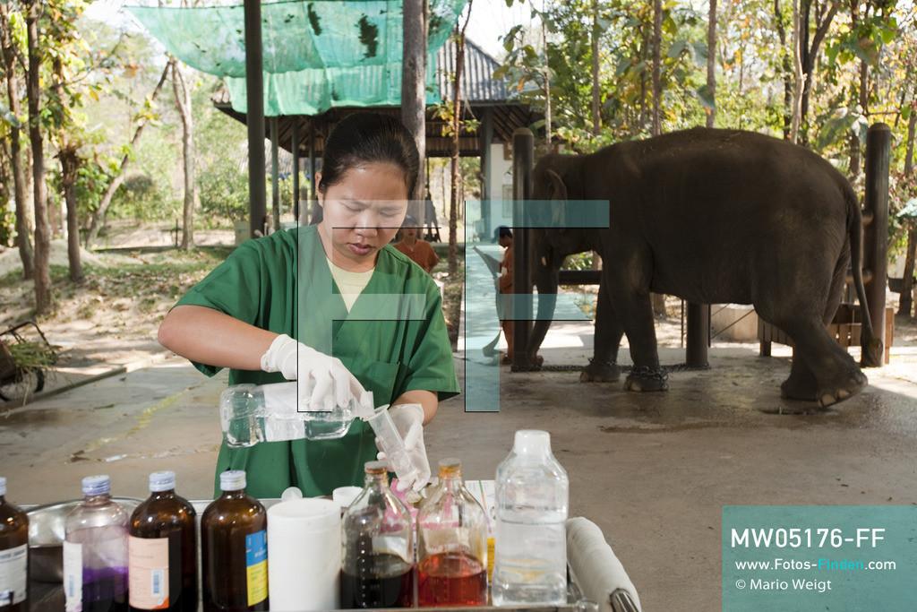 MW05176-FF | Thailand | Lampang | Reportage: Krankenhaus für Elefanten | Tierärztin Cruetong Kayan bereitet die Medizin für die Behandlung der Elefantenkuh Yui in der Krankenstation vor.  ** Feindaten bitte anfragen bei Mario Weigt Photography, info@asia-stories.com **
