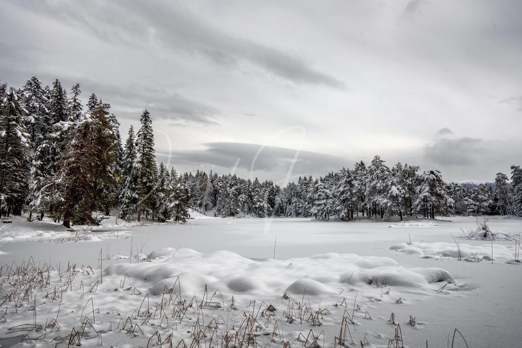 Wintertraum | Winter am Möserer See