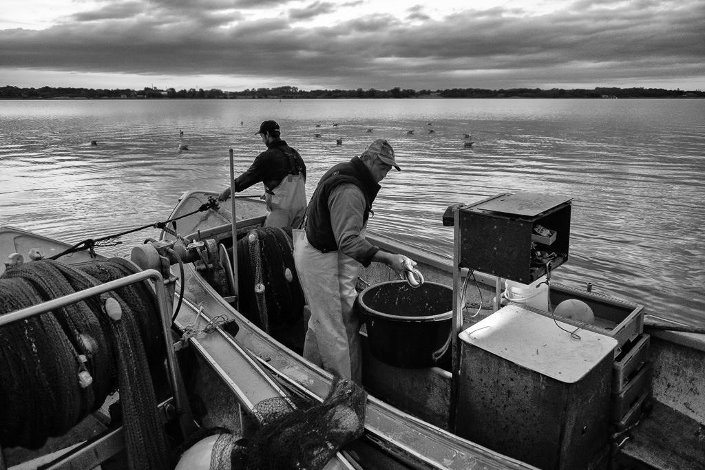 Wadenfischen auf der Schlei © Holger Rüdel | Nach dem Einholen der Wade wird die Beute an Bord eines der beiden Boote auf der Kleinen Breite der Schlei kurz vor Einbruch der Dunkelheit sortiert. Erst im Morgengrauen werden Jörn Ross (rechts) und Sohn Nils von ihrer Fangfahrt nach Schleswig zurückkehren.