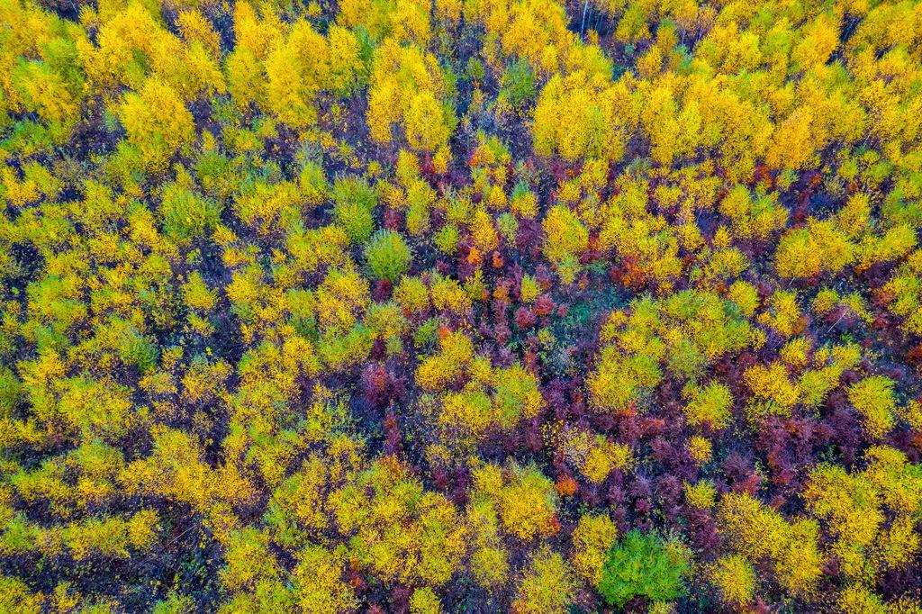 JT-181106-032 | Herbstlicher Wald im Sauerland, NRW, Deutschland, in der Nähe von Schmallenberg,