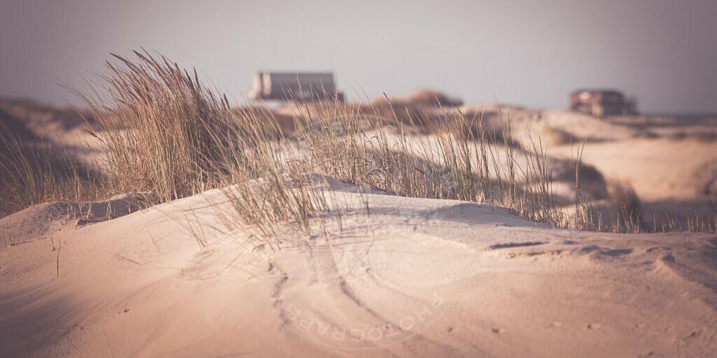 _MGA2060 | Small Things on the Beach
