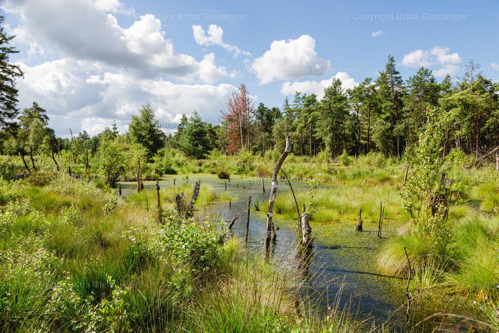 Tister Bauernmoor 3 | Das Tister Bauernmoor ist ein Hochmoor und Naturschutzgebiet in Niedersachsen. Es hat eine Größe von 570 ha und gehört zu dem großen Hochmoorgebiet Ekelmoor. Das Moor liegt in der Nähe des Ortes Tiste, einer Gemeinde in der Samtgemeinde Sittensen im Landkreis Rotenburg (Wümme) und gehört zu dem Naturraum der Wümmeniederung. Das Moor bietet Brut- und Rastplätze für viele, zum Teil seltene Vogelarten und ist einer der bedeutendsten Kranichplätze im nordwestdeutschen Flachland.