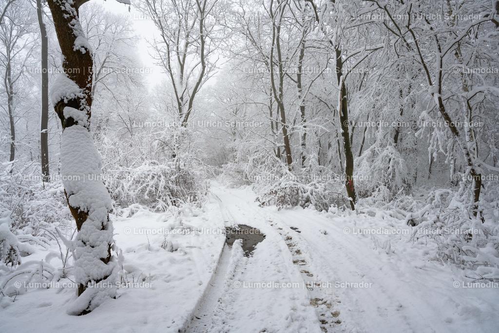 10049-11438 - Winter im Huy | max. Auflösung 8256 x 5504