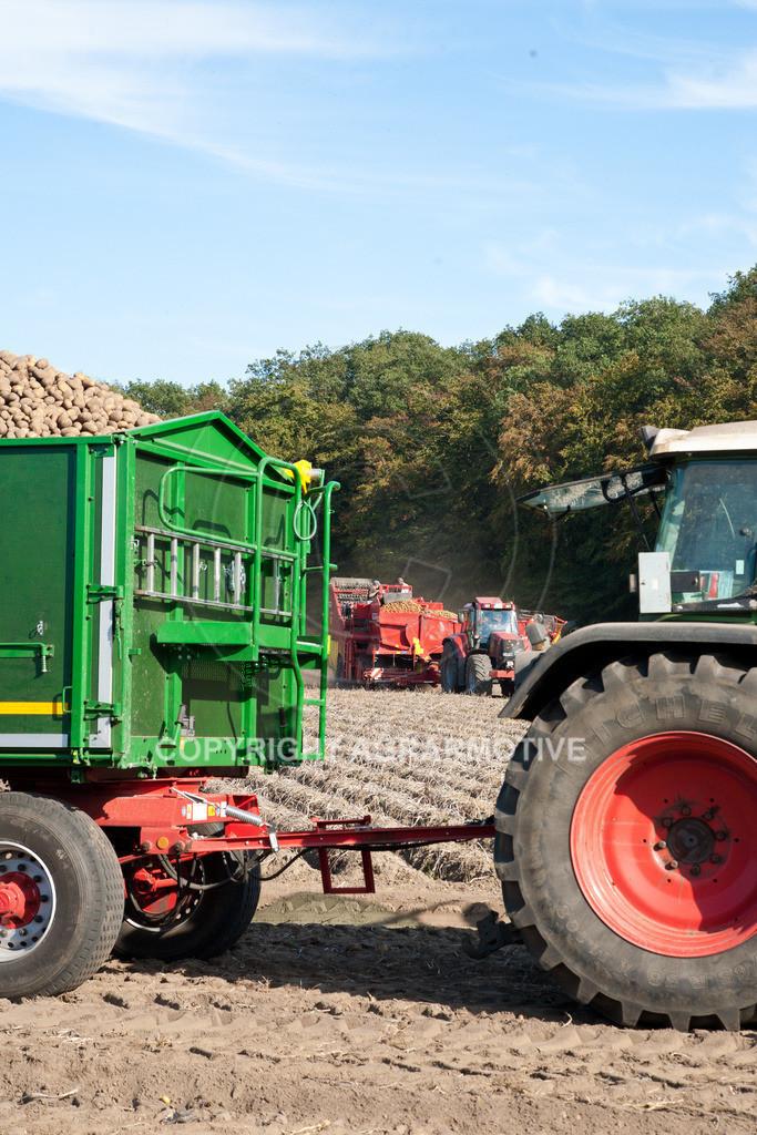 20110929-IMG_6093   Ernte auf einem Kartoffelfeld - AGRARBILDER