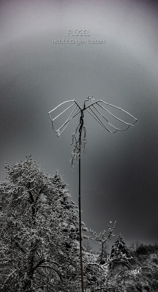 Flügel nicht hängen lassen + Text | Gartenkunst.  Meine Flügel der Freiheit haben mir immer was zu sagen.