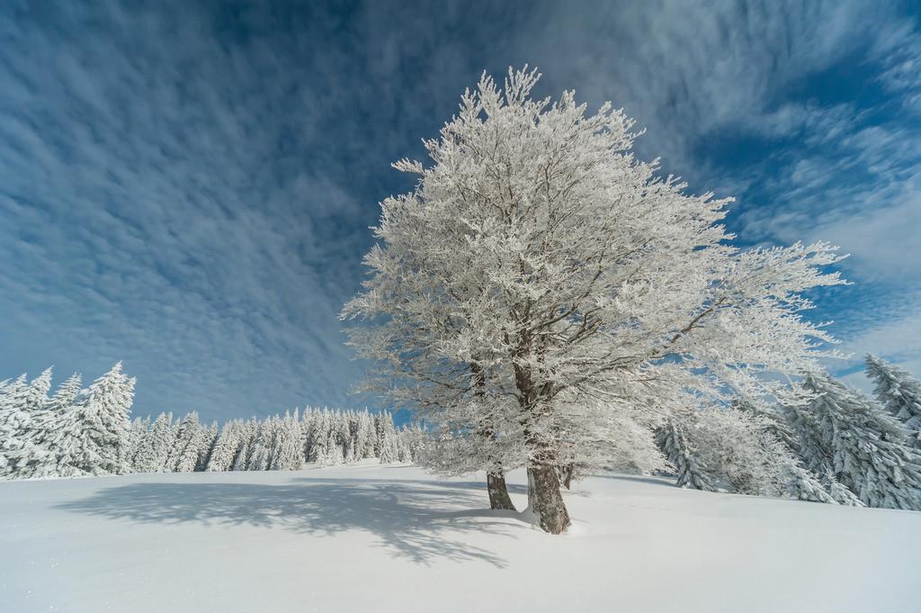 Wintertraum, Schwarzwald | Die Serie 'Deutschlands Landschaften' zeigt die schönsten und wildesten deutschen Landschaften.