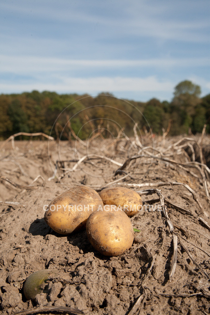 20110929-IMG_5856 | Ernte auf einem Kartoffelfeld - AGRARBILDER