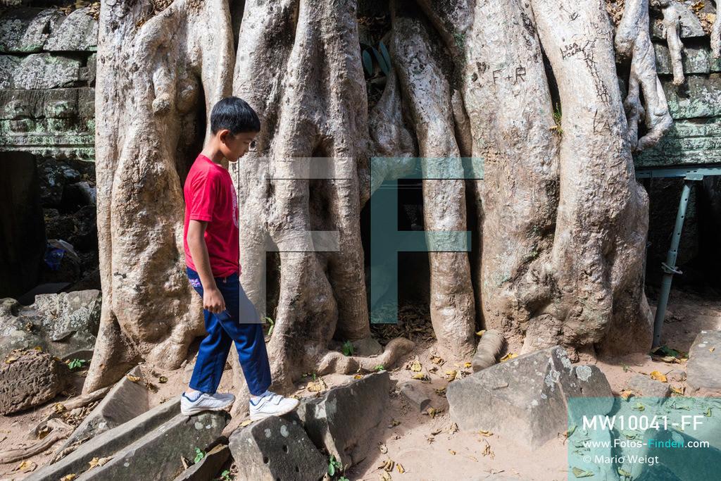 MW10041-FF | Kambodscha | Siem Reap | Reportage: Sombath erkundet Angkor | Sombath klettert an den großen Wurzeln eines Kapokbaumes im Dschungeltempel Ta Prohm vorbei.  Der achtjährige Sombath lebt in Kambodscha im Dorf Anjan, sechs Kilometer westlich von Siem Reap entfernt. In seiner Freizeit nimmt ihn manchmal sein Onkel in die berühmte Tempelanlage von Angkor mit. Besonders mag er die riesigen Wurzeln der Kapokbäume, die auf den uralten Mauern wachsen. Seine Lieblingstempel in Angkor sind Ta Prohm, Banteay Kdei und Preah Khan.  ** Feindaten bitte anfragen bei Mario Weigt Photography, info@asia-stories.com **