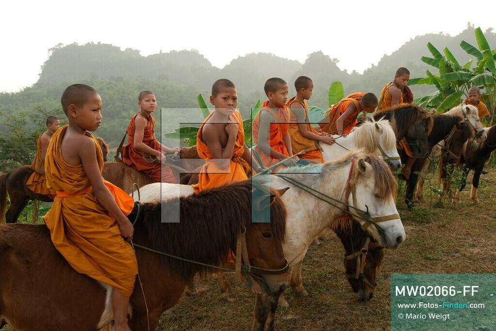 MW02066-FF | Thailand | Goldenes Dreieck | Reportage: Buddhas Ranch im Dschungel | Junge Mönche auf ihren Pferden am Morgen  ** Feindaten bitte anfragen bei Mario Weigt Photography, info@asia-stories.com **