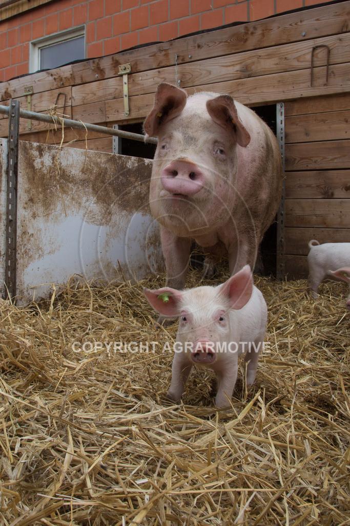 20160705-IMG_7830 | glückliche Schweine