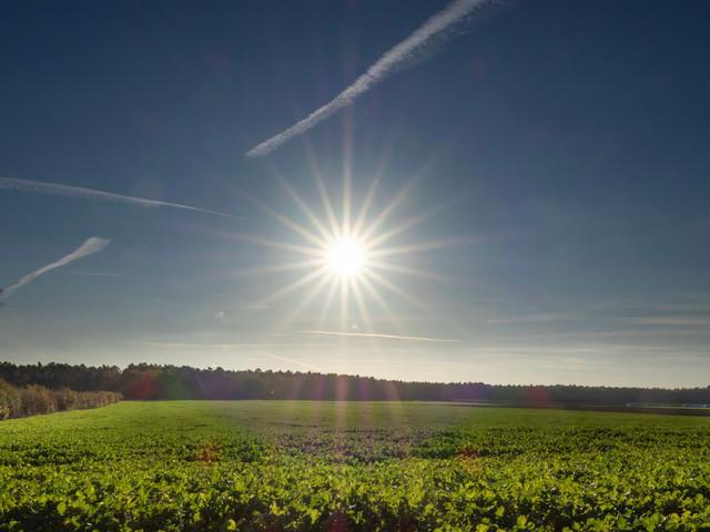 Sunshine | Sunshine