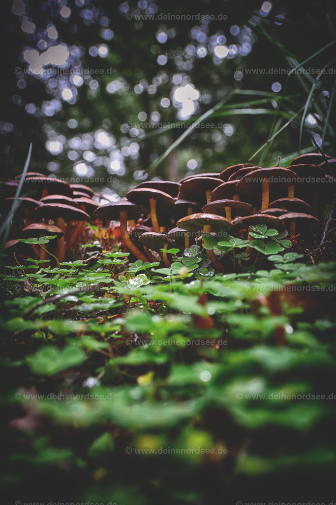 mehrere Männlein stehen im Walde