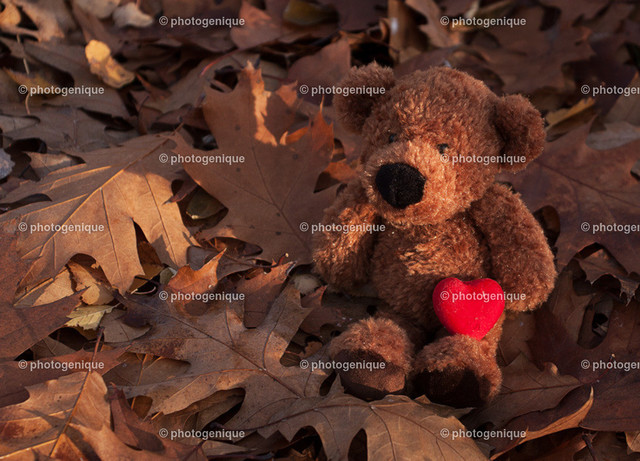Teddy-Herbstlaub-Herz-web