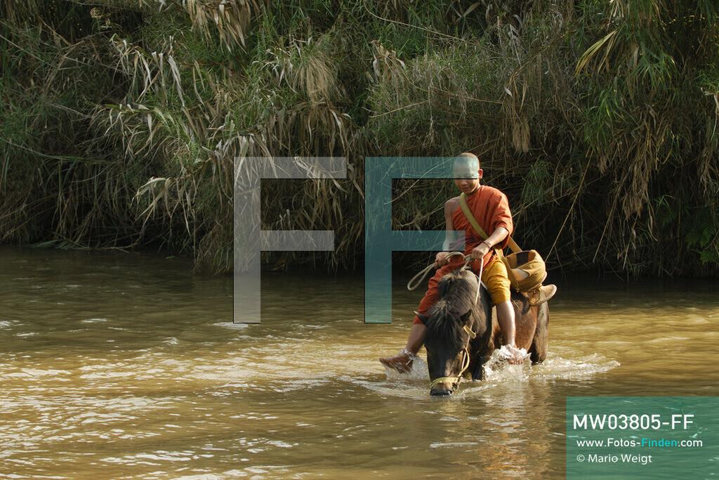 MW03805-FF | Thailand | Goldenes Dreieck | Reportage: Buddhas Ranch im Dschungel | Junger Mönch lässt sein Pferd im Fluss trinken.  ** Feindaten bitte anfragen bei Mario Weigt Photography, info@asia-stories.com **