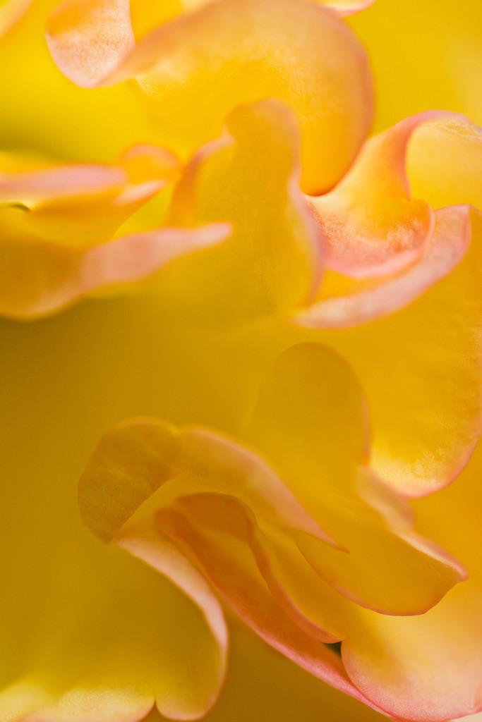 Best. Nr. Farbstimmungen04 | Begonienblüte